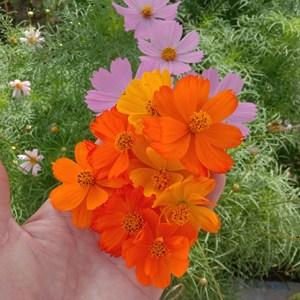 All Flower seeds