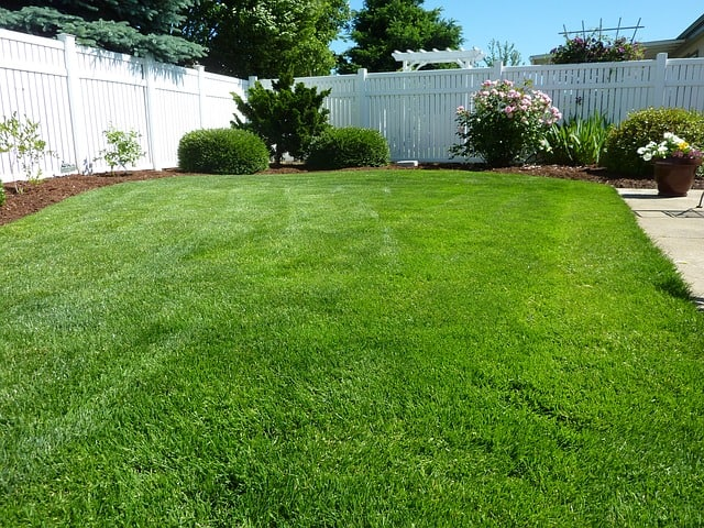 Green grass in a back yard. Get outside in your yard while stuck at home.
