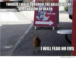 brave-chicken