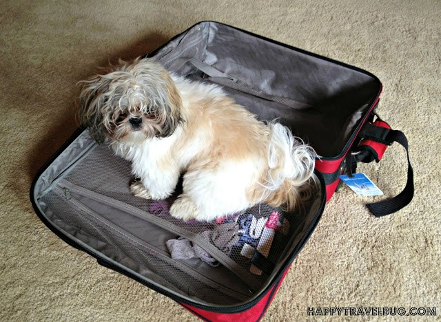My dog in my suitcase