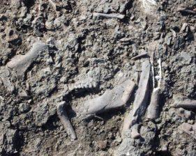 Photo of bones in the ground