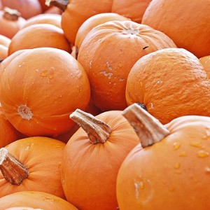 A large pile of bright orange pumpkins with green stems