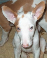catdog_pup