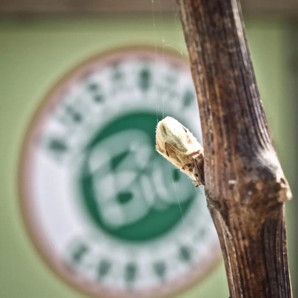 Weinverkauf_Weiden-Weingut_Hareter_Thomas