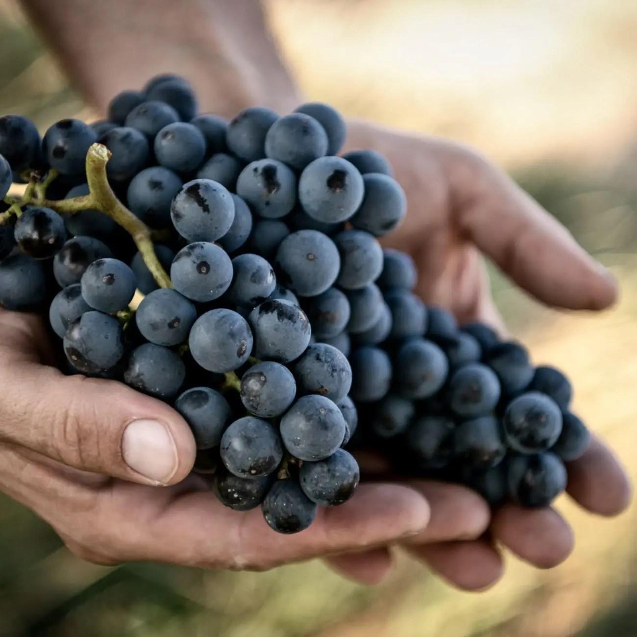 Bioweine_Weiden-Hareter-Wein_ohne_Histamin