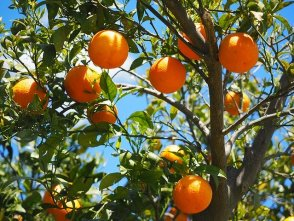 How to Successfully Plant a Fruit Tree