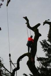 The Dangers of Hiring an Uninsured Arborist