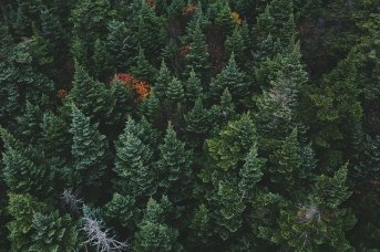 Why Your Property's Evergreen Trees Are Dying