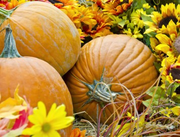 Essential Landscaping Tips for This Fall