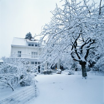 How to Take Care of Your Trees During the Winter