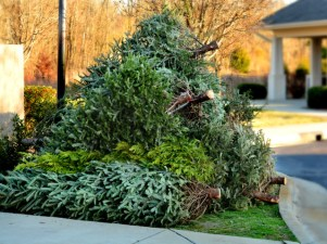 How to Get Rid of Your Family Christmas Tree
