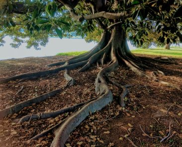 How to Avoid Harming Your Tree's Roots