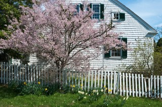 Essential Spring Tree Care Tasks for You to Consider