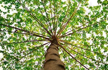 3 Scenarios that Require Emergency Tree Removal Services