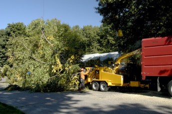How to Tell You Need Emergency Tree Services