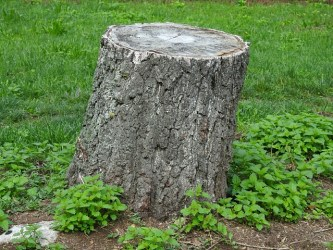 Reasons Why Your Property Might Require Stump Grinding Services