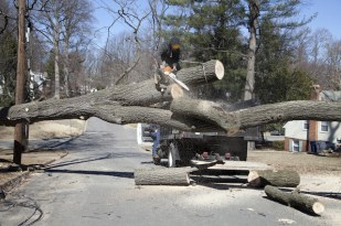 How to Notice Trees that are at Risk During a Hurricane