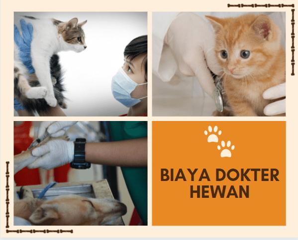 Gambar dan Harga Biaya Dokter Hewan terbaru