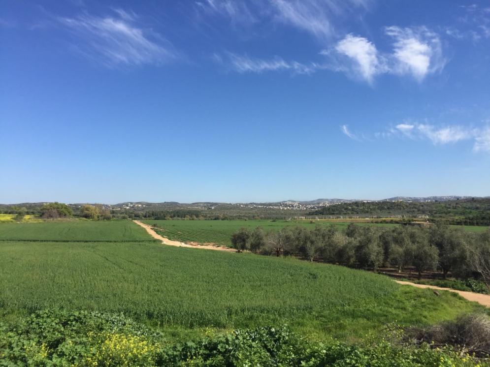 העמק מדרום לשכונת הפרחים בחריש