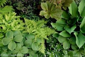 durchdachtes Bepflanzungskonzept mit einheimischen Farnen im Familiengarten