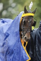 Snowstorm Hanover, who apparently is better suited to cooler weather, loved the cool, rainy conditions | Dave Landry