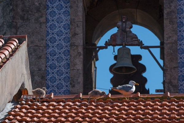 Porto Seagulls