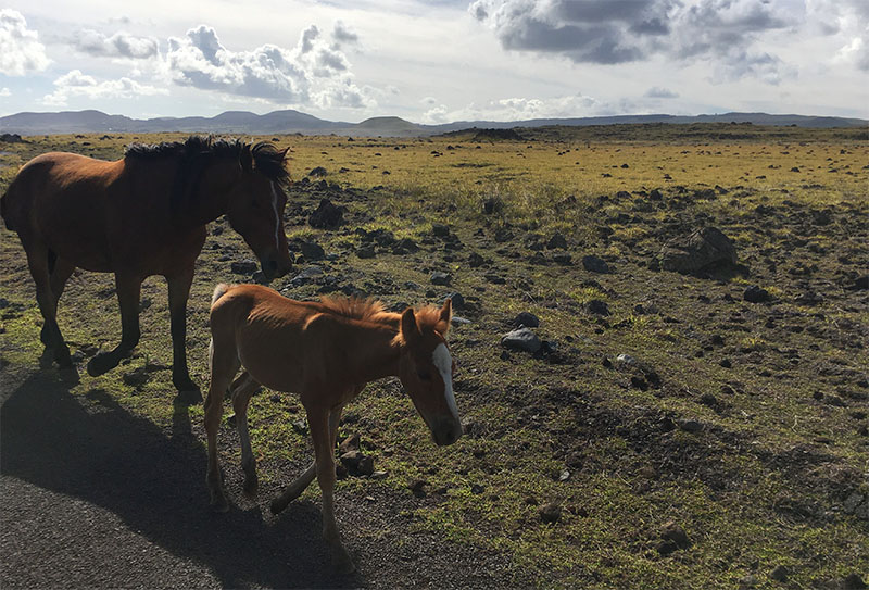 Horses roam freely