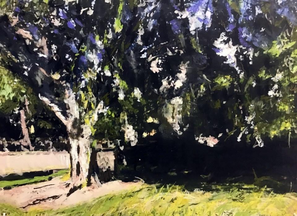 Banyan Tree No 5