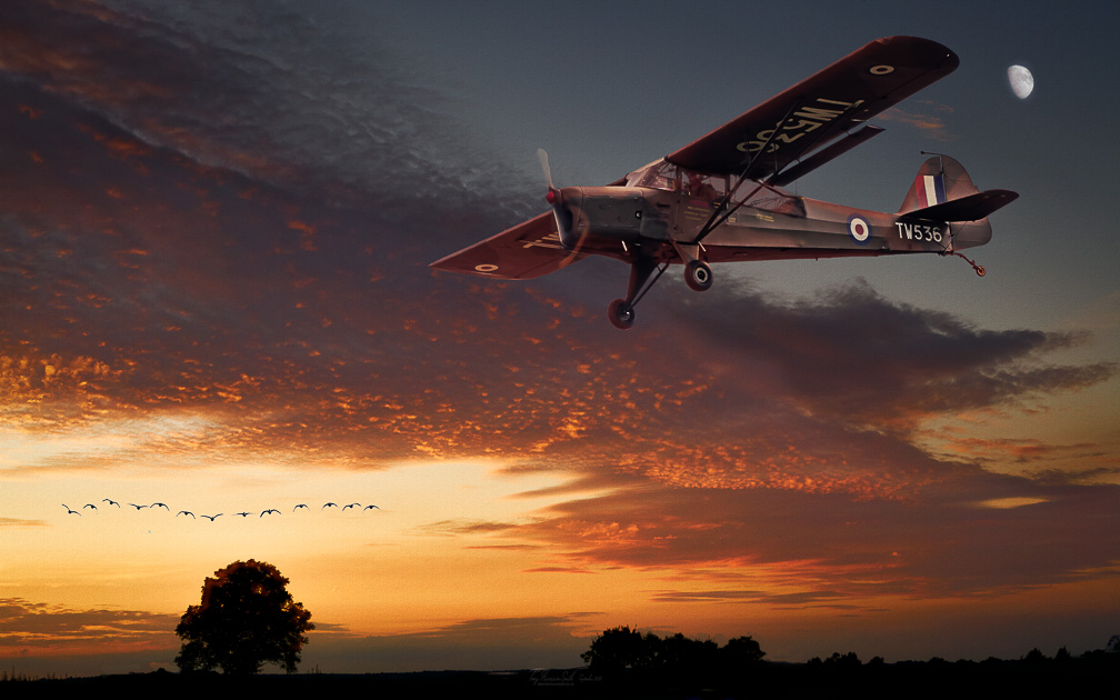 Auster AOP6 aircraft landing at sunset