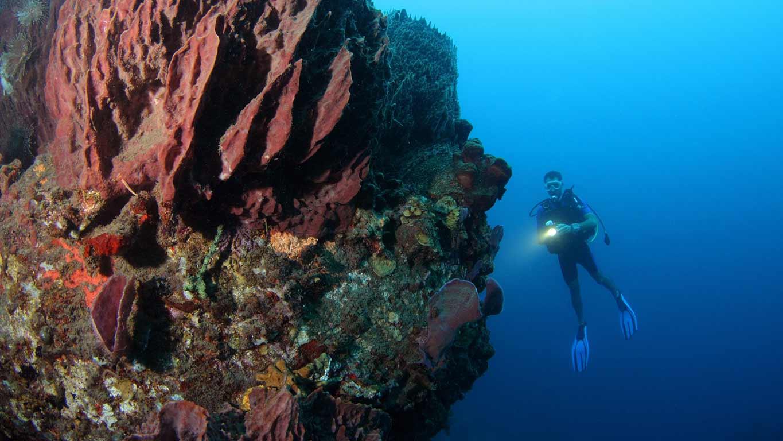Clubs de plonge  Bidart  Explorer les fonds marins de Bidart 64210