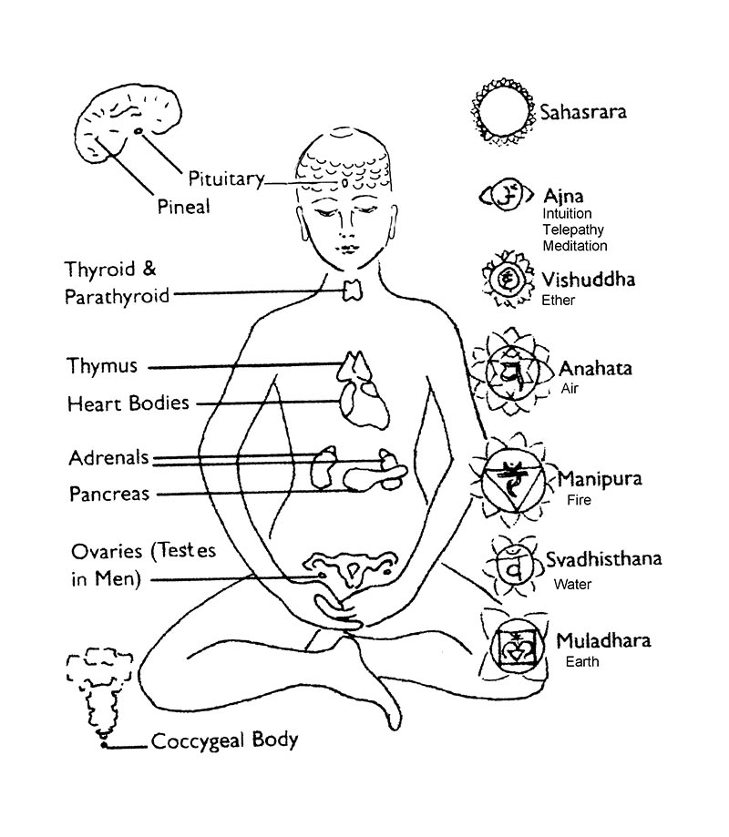Endocrine Glands System Coloring Page Coloring Pages