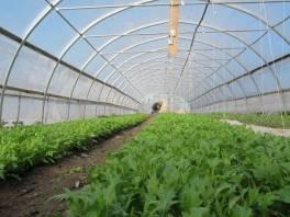 small farms 42