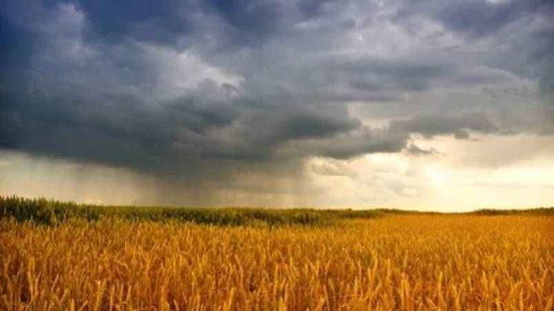 Footnotes from the Grasslands | Harrowsmith Magazine