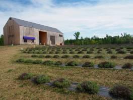 Lavender Farm 30