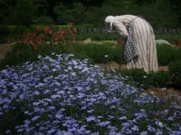 Victorian Garden Album 6
