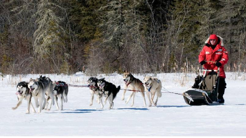 Mushing - Dog Sledding
