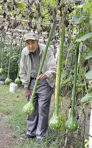 Growing longhandled gourds a hobby of Hartselles Johnny