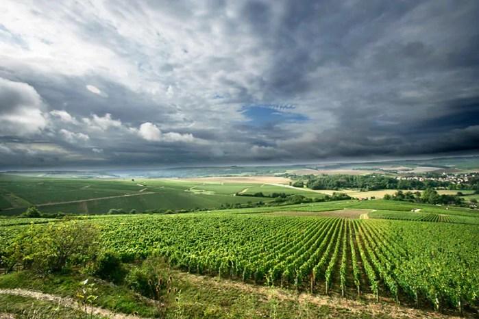 wijnbouw klimaat
