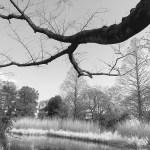 Z公園の写真