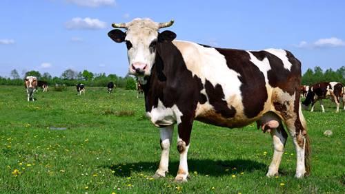 30 Contoh Hewan Herbivora Beserta CiriCiri dan Gambarnya