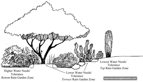 Plants' water needs and tolerance determine their ideal Rain-Garden Zone. See plant lists in appendix 4 of Rainwater Harvesting for Drylands and Beyond, Volume 1, 2nd Edition, for more.