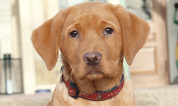 Alma-der-burgberg-hund