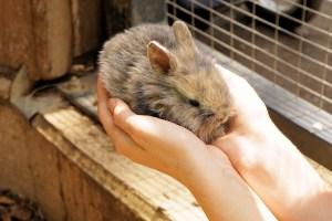 Kaninchen Außengehege kaufen - Freilaufgehege Kaninchen - Kaninchen brauchen viel Platz in ihrem Kaninchen Freigehege zur artgerechten Haltung. Kaninchenstall reinigen und Kaninchenstall Hygiene.