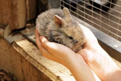 Kaninchen Außengehege kaufen - Freilaufgehege Kaninchen - Kaninchen brauchen viel Platz in ihrem Kaninchen Freigehege zur artgerechten Haltung.