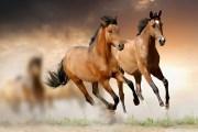 تطبيق 'غورت' يلجم الاصابات عند خيول السباق