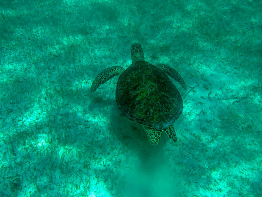 Definitely don't skip Akumal Beach when you are in Mexico. You can snorkel and swim with turtles and manta rays here