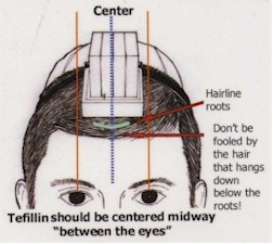 Tefillin should be centered midway between the eyes.