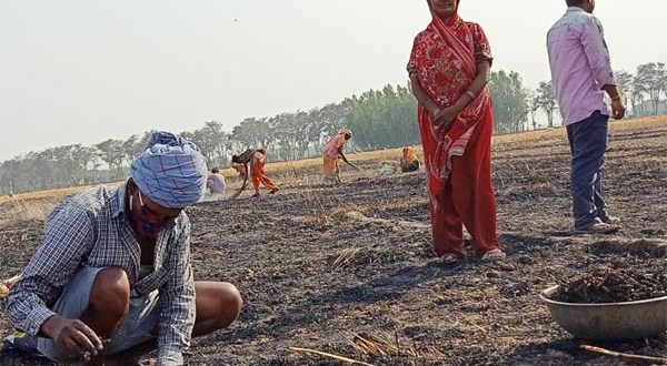 More than 50 bighas of wheat crop burnt to ashes of 36 farmers of village Parsa Hussain of Dumariyaganj area