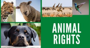 animal rights in india