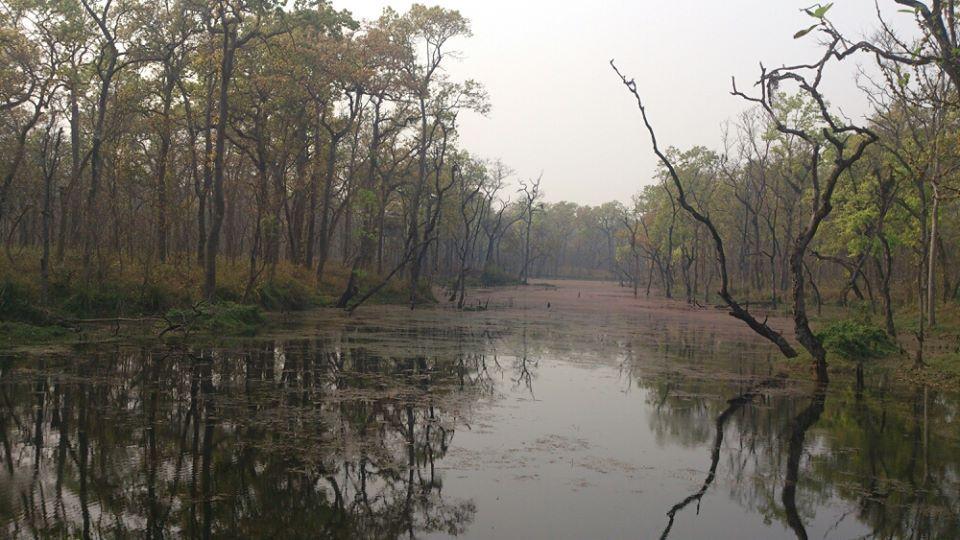 chitwan, rinocerontes, chitwan selva nepal, nepal, nepal chitwan, lago nepal